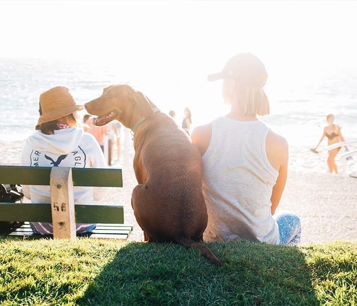 Dog at Pet-Friendly Beach