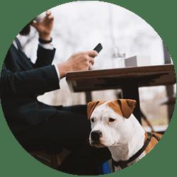 Dogs in Restaurants