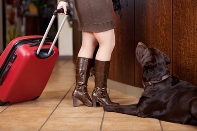 Dogs in Hotels and Travel