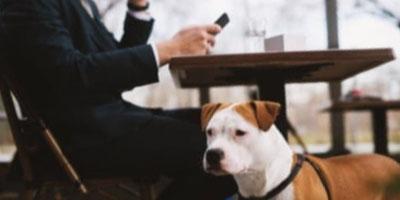 Dogsurance Cafe Dog Safety Training