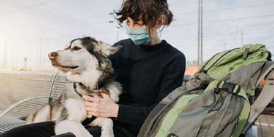 Dog Safety Training