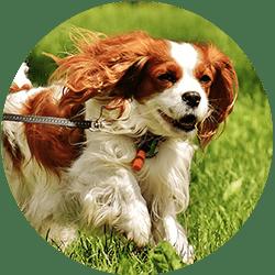 SAFE Dog Bite Prevention