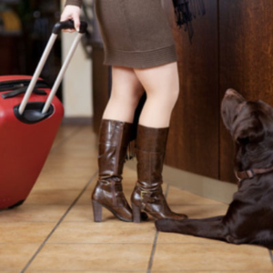 Occupational Dog Bite Prevention Training for Travel Industry