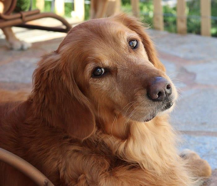 Pet Liability Insurance Discounts